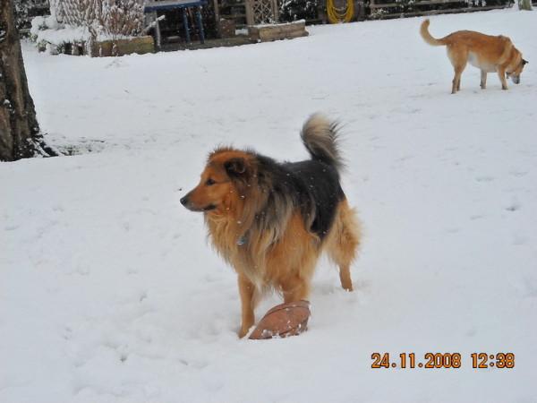 Mikosch ein Traum von Hund